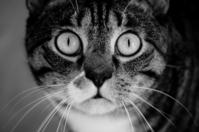a cat 1
