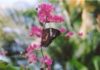 butterfly0 2