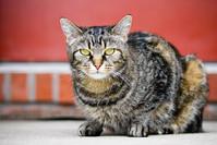 Willow Cat 3
