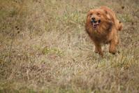 Ginger dog 3