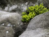 between the rocks