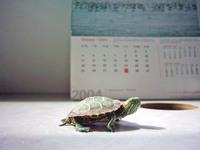 mini_turtle