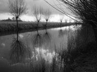MirrorTwigs 1