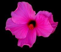 flower-again