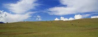 Pastoral Pasture