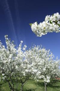 Blue Spring 1