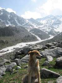 Dog at glacier in Himalayas, India 3
