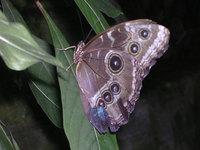 Butterfly Conservatory 6