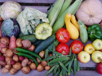 August Vegetables 3