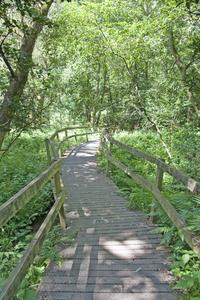 Woodland Trail 1