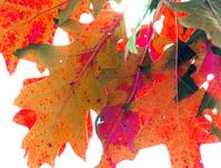Autumn Reminders