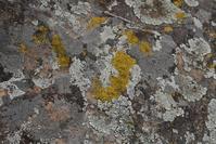 Lichen encrusted rock