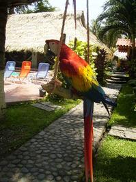 Parrots 4