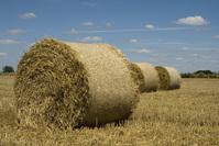 Harvest session::.. 3