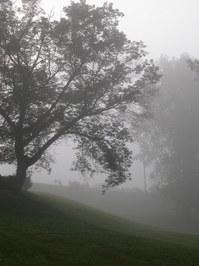 Tree Silouettes in fog 1