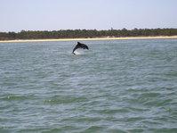 Dolphin Sado 2