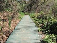 Creek Trail Footbridge