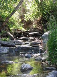 Ducks on the Stream