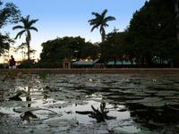 Botanic pond 1
