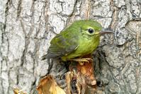 sad green bird