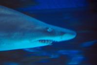 respect the shark V