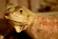 Lizard 01 2