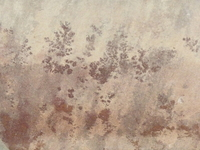 Quarzite with plant inclusions