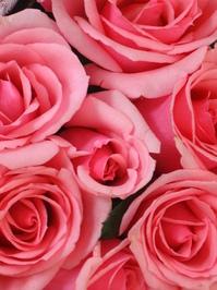 Roses roses roses! 2