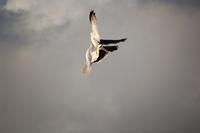 Sea Gull_3_11.08.2005