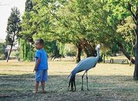 bird & boy