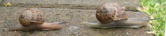 Snails 4