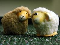 lambs 19
