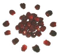 Meeting of raspberries