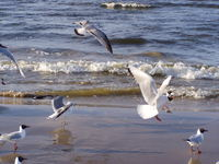 Sea-gulls 3