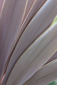 Purple Plant 1