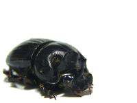 big_bug_ugly 1