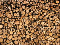 bg-wood