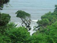 sea & vegetation