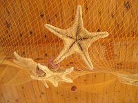 Dryed sea stars