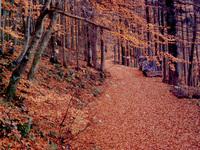 Autumn in Black Forest