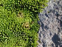 Moss World 3