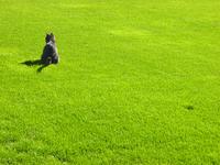 Feline green