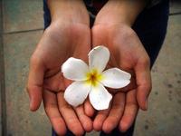 flower in hand II