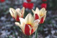 Flowers in Stanley Park 2