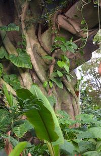 Tropical Flora/Plants 4