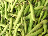 Produce - Fava Bean