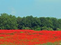 Midsummer Fields 4