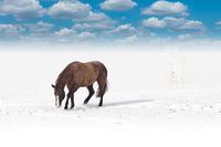 Stallion in Winter Wonderland
