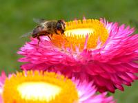 Bee 5