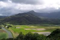 Hawaiian Farmland